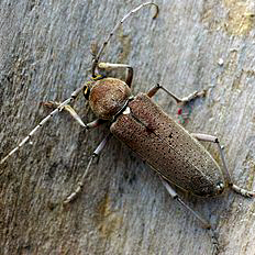 Vers bois et parquet danger d tection pr vention for Insecte qui mange le bois
